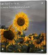Stand Out Acrylic Print by Bill Wakeley