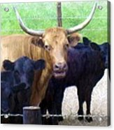 Standout Steer Acrylic Print by Ric Darrell