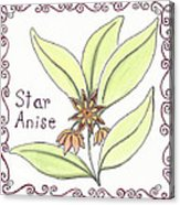 Star Anise Acrylic Print by Christy Beckwith