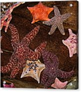Starfish Variety 5d24133 Acrylic Print by Wingsdomain Art and Photography