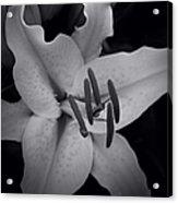 Stargazer Acrylic Print by Sharon Mau