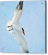 Steep Tern Acrylic Print by Fraida Gutovich