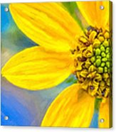 Stone Mountain Yellow Daisy Details - North Georgia Flowers Acrylic Print by Mark E Tisdale