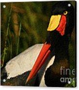 Stork Colors Acrylic Print by Adrian Tavano