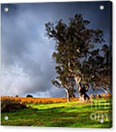 Storm Onto A Vineyard Acrylic Print by Boon Mee