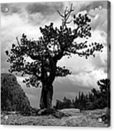 Storm Tree Acrylic Print by Tranquil Light  Photography