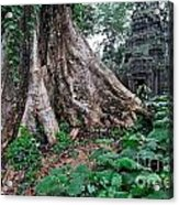 Strangler Fig Tree Roots On The Ancient Preah Khan Temple Acrylic Print by Sami Sarkis