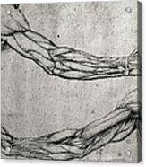 Study Of Arms Acrylic Print by Leonardo Da Vinci