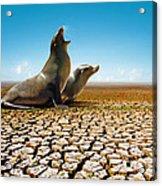 Suffering Seals Acrylic Print by Carlos Caetano