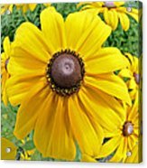 Summers Bloom Acrylic Print by Susan Leggett