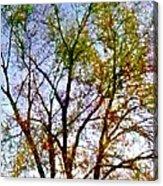 Sun Dappled Acrylic Print by Dale   Ford