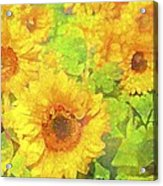 Sunflower 19 Acrylic Print by Pamela Cooper