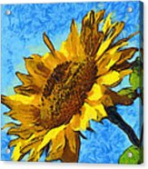 Sunflower Abstract Acrylic Print by Unknown