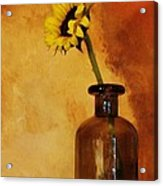 Sunflower In A Brown Bottle Acrylic Print by Marsha Heiken