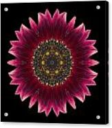 Sunflower Moulin Rouge I Flower Mandala Acrylic Print by David J Bookbinder