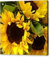 Sunflowers Acrylic Print by Amy Vangsgard