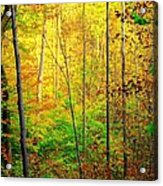 Sunlights Warmth Acrylic Print by Frozen in Time Fine Art Photography