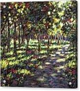 Sunlit Trees Acrylic Print by John  Nolan