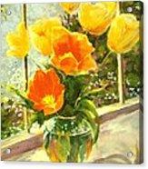 Sunlit Tulips Acrylic Print by Madeleine Holzberg