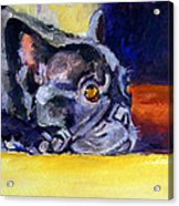 Sunny Patch French Bulldog Acrylic Print by Lyn Cook