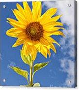 Sunny Sunflower Acrylic Print by Joshua Clark