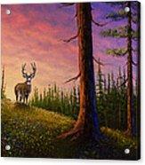 Sunrise Buck Acrylic Print by C Steele