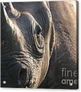 Sunrise Rhino Acrylic Print by Alison Kennedy-Benson
