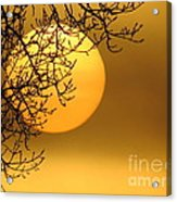 Sunrise Through The Fog Acrylic Print by David Lankton