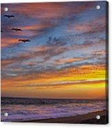 Sunset Flight Acrylic Print by Robert Jensen