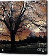 Surreal Fantasy Gothic Trees Nature Sunset Acrylic Print by Kathy Fornal