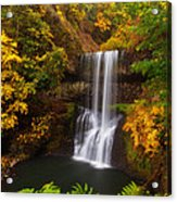 Surrounded By Fall Acrylic Print by Darren  White