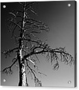 Survival Tree Acrylic Print by Chad Dutson