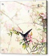 Swallowtail In Spring Acrylic Print by Stephanie Frey