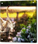 Swan Lake Acrylic Print by Lois Bryan