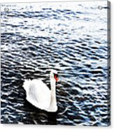 Swan Acrylic Print by Mark Rogan