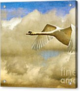 Swan Song Acrylic Print by Lois Bryan