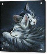 Sweet Dreams Acrylic Print by Cynthia House
