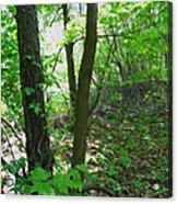 Swirled Forest 1 - Digital Painting Effect Acrylic Print by Rhonda Barrett