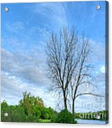 Swirly Sky And Tree Acrylic Print by Deborah Smolinske