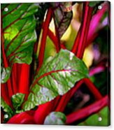Swiss Chard Forest Acrylic Print by Karen Wiles