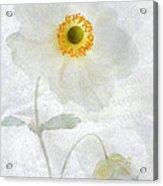 Symphony Acrylic Print by John Edwards