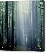 T. Bonderud Path Through Trees In Mist Acrylic Print by First Light