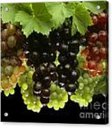 Table Grapes Acrylic Print by Craig Lovell
