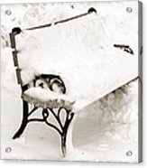 Take A Seat  And Chill Out - Park Bench - Winter - Snow Storm Bw Acrylic Print by Andee Design