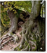 Taking Root Acrylic Print by Heiko Koehrer-Wagner