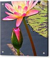 Tall Waterlily Beauty Acrylic Print by Byron Varvarigos