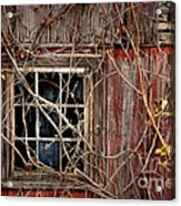 Tangled Up In Time Acrylic Print by Lois Bryan