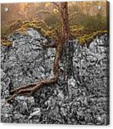 Taproot Acrylic Print by Mary Jo Allen