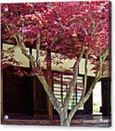 Tea House Thru The Maple Acrylic Print by Tom Gari Gallery-Three-Photography
