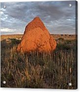 Termite Mound, Exmouth Western Acrylic Print by Science Photo Library